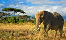 Top Tourist Attractions in KENYA