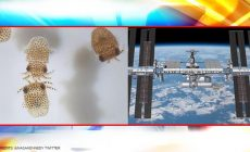 Why Nasa is sending baby Squids, water bears to International Space Station